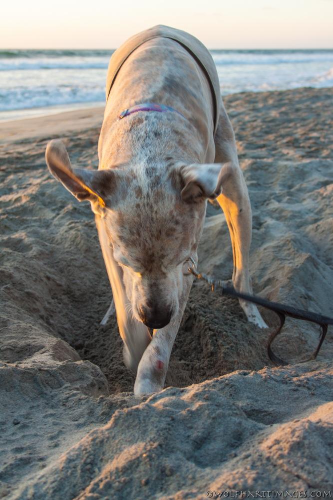 Last good dig at the beach