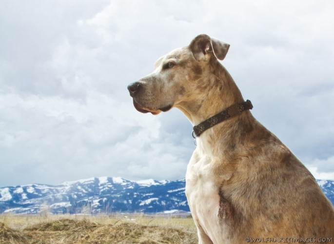Taking in the view of Teton Valley