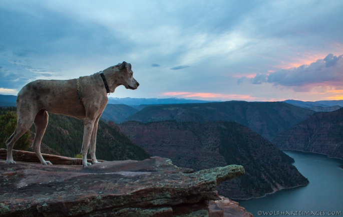 sunset at Flaming Gorge, Great Dane, K'Ehleyr